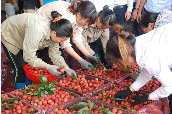 Hơn 74% rau quả xuất khẩu sang Trung Quốc