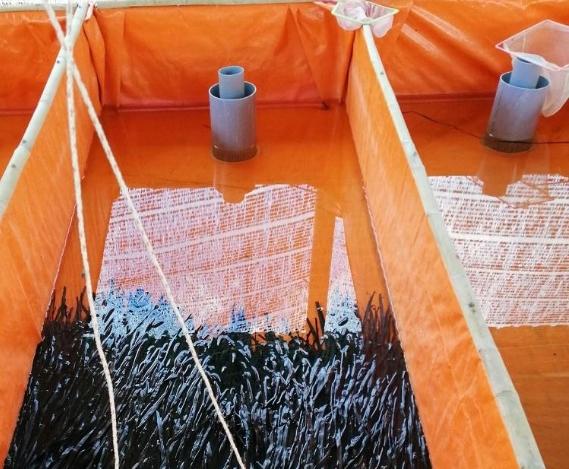 Kỹ thuật nuôi lươn thương phẩm trong bể bạt bằng con giống nhân tạo, sử dụng nước ngầm
