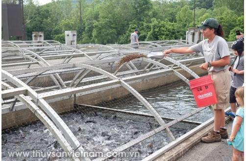 Chiến lược dinh dưỡng cải thiện hệ tiêu hóa thủy sản