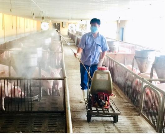 Kỹ thuật chăn nuôi heo an toàn sinh học