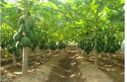 Hướng dẫn kỹ thuật canh tác lúa và cây ăn trái trong điều kiện hạn, mặn