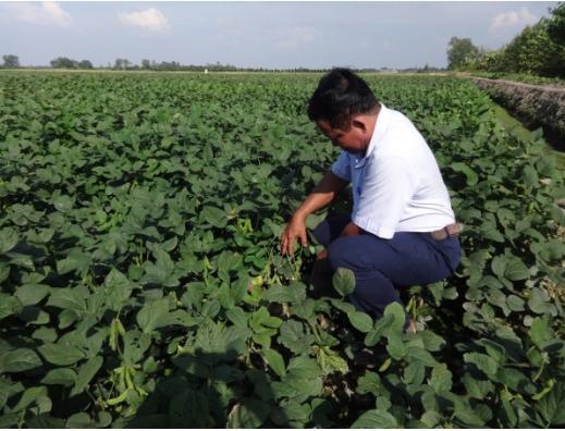 Thực hiện phối hợp xây dựng mô hình và tiêu thụ sản phẩm đậu nành rau trên nền đất lúa