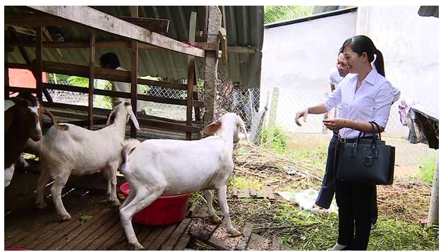 Ông Nguyễn Đạt Thành ở ấp Vĩnh Hội, xã Hựu Thành-Vươn lên thoát nghèo với mô hình nuôi dê