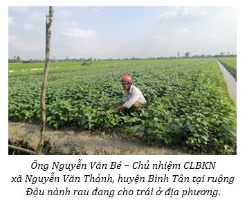 Trồng đậu nành rau thu lợi nhuận gấp 2 lần trồng lúa