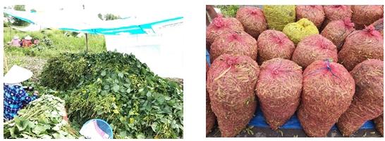 Trồng đậu nành rau – mô hình luân canh hiệu quả trên nền đất lúa