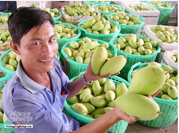 Phát triển bền vững trái cây ĐBSCL: Thách thức từ con người và thiên nhiên