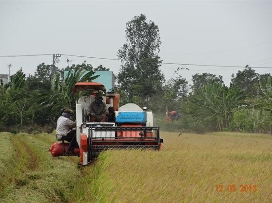 Trung Quốc sẽ tiếp tục giảm nhập khẩu gạo