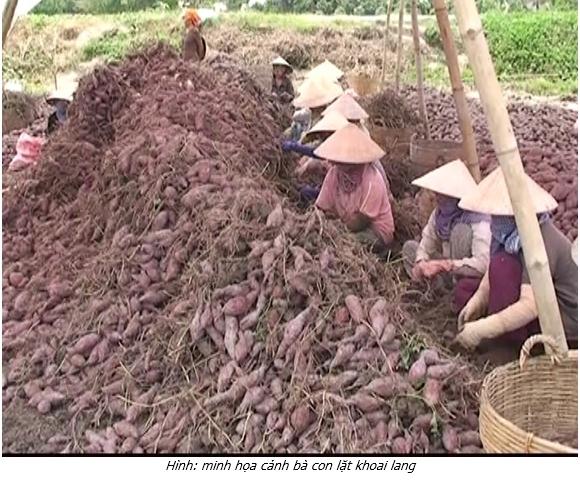 Bình Tân –phấn đấu sản lượng rau màu đạt 596.790 tấn năm 2019