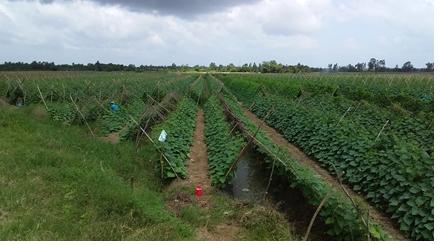 Tam Bình: Tổ chức hội nghị sơ kết thực hiện đề án cơ cấu lại ngành Nông nghiệp 6 tháng đầu năm 2019