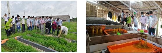 Tập huấn nâng cao trình độ, năng lực cho cộng tác viên cơ sở ngành Khuyến nông tỉnh Vĩnh Long năm 2020