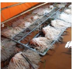 Một số lưu ý khi chuẩn bị nuôi lươn không bùn