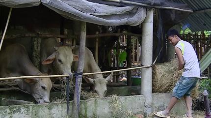 Hiệu quả mô hình Hợp tác xã nông nghiệp Thuận Thới