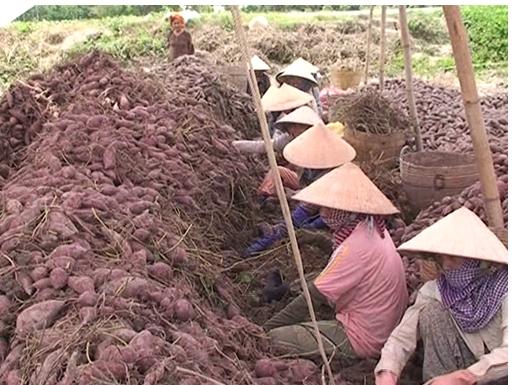 Bình Tân- đạt nhiều thành tựu, vững bước tiến lên xây dựng huyện nông thôn mới