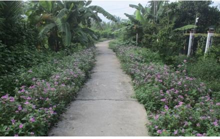 Xã Hòa Thạnh sẽ thực hiện đạt 19 tiêu chí nông thôn mới trong năm 2020