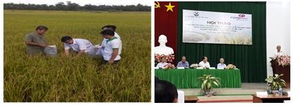 Định hướng sản xuất Nông nghiệp huyện Tam Bình năm 2020