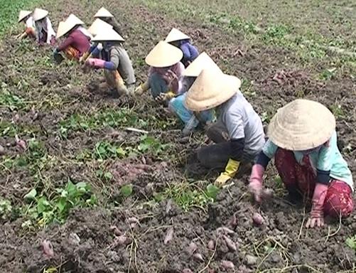 Bình Tân- hình thành 2 vùng sản xuất nông nghiệp đặc trưng cho thu nhập cao