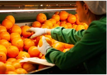 Nguồn cung quýt và cam của Tây Ban Nha có thể tăng 25-30% trong năm nay