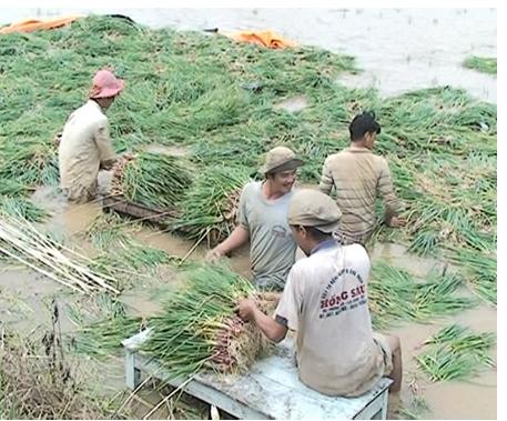 Giá cả nhiều mặt hàng nông sản tại Bình Tân tăng cao