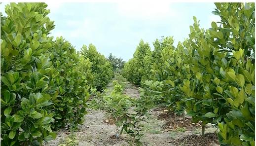 Bình Tân giá trị sản xuất Nông – Lâm – Thủy sản 6 tháng đầu năm đạt trên 1.611 tỷ đồng