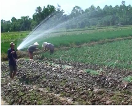 Mỗi công hành lá thương phẩm, nông dân lợi nhuận khoảng 15 triệu đồng