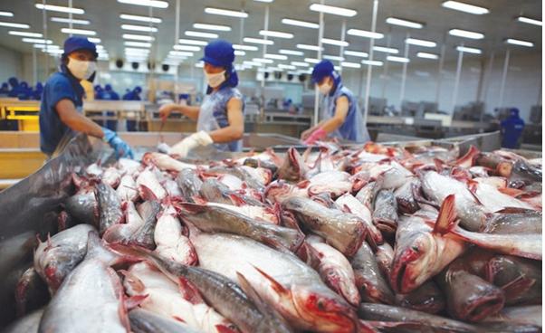 Thủy sản Việt Nam đang được xuất sang 154 thị trường, riêng 6 thị trường lớn chiếm gần 80% kim ngạch